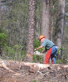 Firewood 101 Provident Living, Firewood Storage, Farm Life, Types Of Wood, Homesteading, Animals, Wood Types, Animales, Animaux