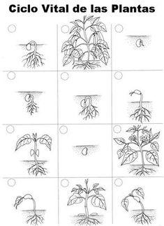 Life Cycle Flip Books -- Exploring Nature Educational Resource Membership needed Montessori Science, Science Classroom, Teaching Science, Science For Kids, Science Activities, Life Science, Science And Nature, Sequencing Activities, Plant Life Cycle Worksheet