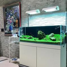 【pantanal1988】さんのInstagramをピンしています。 《ネッツトヨタノヴェルとやま山室店さんに 制作したネイチャーアクアリウムは 世界水草レイアウトコンテスト2015で 初めて96位になった作品( ◠‿◠ ) 改めて創ると懐かしい(^_^) #AquaDesignAmano #ada300itemshop #Nature_Aquarium #NatureAquarium #Iaplc#aquariumplants #aquariumsofinstagram #aquariumhobby #freshwaterfishtank #freshwateraquarium #freshwaterfish #plantedtanks #plantedaquarium #planted #aquascaping #aquascape #aquaticplants #aquaticplant#ネイチャーアクアリウム #AQUAWorldパンタナル #パンタナル #JAPAN #富山#アクアリウム #Aquarium #水草 #熱帯魚 #水槽 #テラリウム…