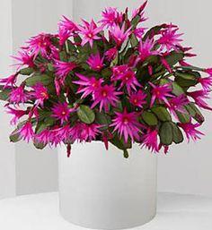 Ejemplos de flores unisexual flower