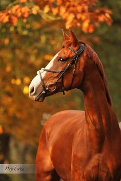 Australia a Oldenburg horse that does not have a family yet please comment if…