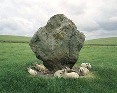 Sheep and Standing Stone, Avenbury, England, Photographer: Barry Andersen