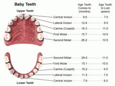 Baby Teeth - arrival and departure :-)