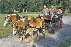 Carriage Tours - Group & Private Horse and Carriage Rides | Biltmore