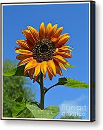 Sunny Sunflower 2 Photograph by Chalet Roome-Rigdon - Sunny Sunflower 2 Fine Art Prints and Posters for Sale