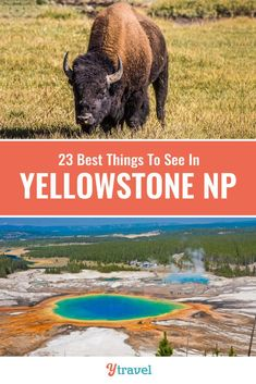 Planning to visit Yellowstone? Here are 23 incredible things to do in Yellowstone National Park including hot springs, geysers, wildlife spotting, hikes, scenic drives and much more. | Wyoming | National Park | USA Travel | Yellowstone Tips | Family Travel | National Parks | Road Trip | Road Trips | Vacation. #Yellowstone #nationalparks #waterfalls #YellowstoneNationalPark #travel #traveltips #roadtrip #roadtrips #usatravel