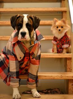 Plaid family! These two dogs are adorable.