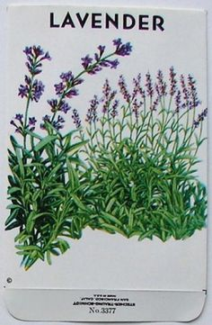 Vintage Lavender Seed Packet (printed in late 1980's from a 1920's design)