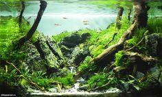 """""""Heart of Nature"""" by André Franken (Mönchengladbach, Germany)  Aquarium Volume: 35 l Aquarium Age: 3 months Animals: Boraras brigittae, Caridina babaulti Plants: Bolbitis heteroclita difformis, Cryptocoryne parva, Eleocharis acicularis, Fissidens nobilis, Hemianthus callitrichoides Cuba, Hemianthus glomeratus, Riccardia sp., Utricularia graminifolia, Vesicularia sp. Triangle moss  => 4th place in the 1st stage of the Scaper's Tank Contest ... Aquarium Landscape, Nature Aquarium, Planted Aquarium, Month Animals, Aquarium Driftwood, Nano Aquarium, Photoshop, Aquatic Plants, Green Mountain"""