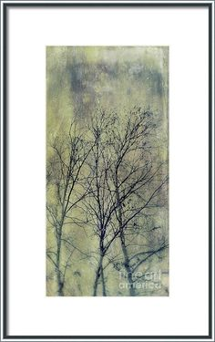 Tree Framed Print featuring the photograph Trees by Priska Wettstein