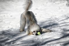Play??? by Higher Standards, via Flickr