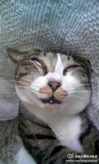 Too pooped to care. Funny Cat Faces, Funny Cute Cats, Funny Cats And Dogs, Silly Cats, Cute Funny Animals, Crazy Cats, Cool Cats, Cats And Kittens, Cute Animal Memes