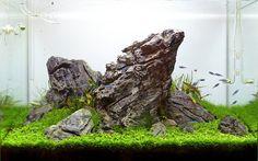 Aquascaping you can believe in. #ROCK #RICCARDIA #NATURE AQUARIUM #FRESHWATER #PLANTED AQUARIUM