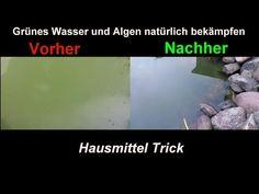 Algen im Gartenteich natürlich & effektiv mit Hausmitteln bekämpfen Klares Teich Wasser ohne Chemie - YouTube
