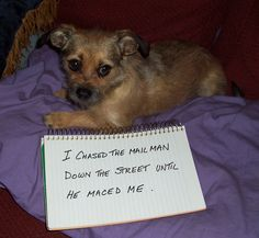 """Dog Shaming"" Photo. The Mailman had a BAD day... So did Mommy."