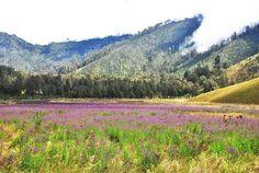 Oro-Oro Ombo - Mt. Semeru, Indonesia