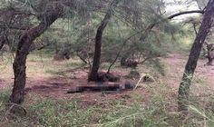 Huế: Phát hiện thi thể người đàn ông chết cháy trong rừng phòng hộ - Tin tức tổng hợp 24h