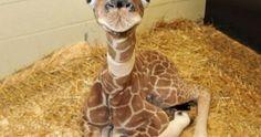 "30 Bebés de Animales Que Te Harán Exclamar ""Oooh"""