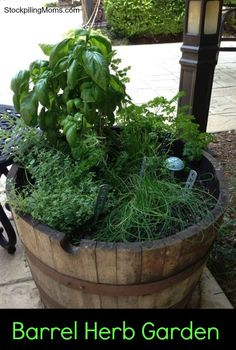 Don't have space to garden check out this idea for a barrel herb garden.