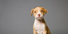 Six More States May Outlaw Breed-Specific Legislation, Making Everything Better For Pit Bulls