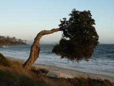 Tasmania - Our retreat - Mark Stallwood Photography | SmugMug