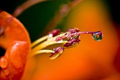 Flor humeda by on Tropical Colors