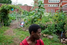 Tall brick walls conceal a colorful garden at Eastern Senior High School in Washington, D.C., where students like Romario Bramwell, 17, harvest flowers and produce. The program is run by City Blossoms, a nonprofit that brings gardens to urban areas.