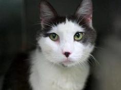 **TO BE DESTROYED 08/21/16** BEGINNER-rated SMUDGE sounds like the friendliest…