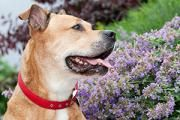 What plants are safe for your dogs? ASPCA Animal Poison Control FAQ