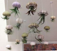 Amazing Hanging Air Plants Decor Ideas 22