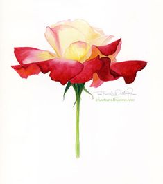 Double Delight Rose watercolor by Teri Farrell-Gittins