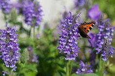 Locka fjärilar till din trädgård | Blomsterlandet.se