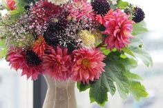 It's so hard to believe we have arrived at Week but the flowers tell us it is so. Much is blooming early here in the Pacific Northwest. The flower farmers report that their crops are expl… Flower Farmer, Dahlia, Design Projects, Floral Design, Floral Wreath, Bloom, Challenges, Seasons, Flowers