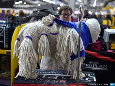 UNITED STATES, New York : A Komondorok being groomed in the benching area at Pier 92 and 94 in New York City on the 2nd day of competition at  the 139th Annual Westminster Kennel Club Dog Show February 17, 2015.  The Westminster Kennel Club Dog Show is a two-day, all-breed benched  show that takes place at both Pier 92 & 94 and at Madison Square  Garden in New York City.  AFP PHOTO / TIMOTHY A. CLARY
