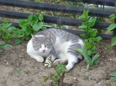 Poisoned Cat - Update (The Expected Turn) - News - Bubblews