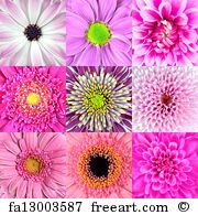 Collection Of Nine Pink Flower Macros - Art Print