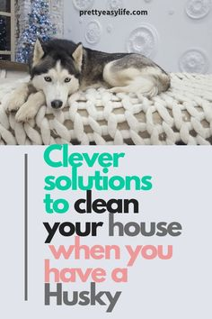 Huskies shed a lot, White Siberian Huskies will leave a white path around your house. Clever solutions to clean your house when you have a husky. Believe me, you need to read this if you own a Husky. Siberian Husky Dog, Husky Puppy, Husky Shedding, Husky Grooming, Husky Training, Husky Breeds, Yorkshire Terrier Puppies, Dog Activities, Dog Care