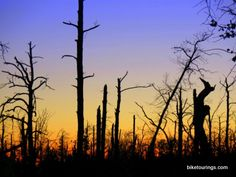 Picture of standing dead trees after a forest fire silhouetted at sunset.