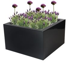 Polyester plantenbak Lotus 100x100x60 cm | Hoogglans antraciet-zwart