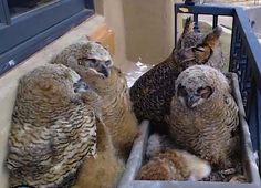 Alessondra's OKC Owl Cam hosts fundraiser for local food bank ...