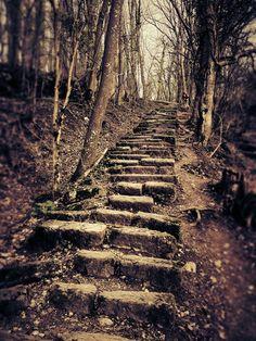 A free hike on the Salève? More info on My Big Geneva...