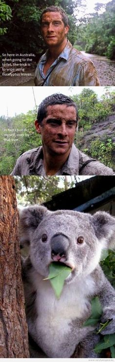 Funny Pictures | people animals  | Bear Grylls uses eucalyptus leaves