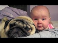 Dogs and babies are best friends - Cute and funny compilation