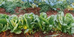 Intercropping, what vegetables we grow together in the garden, Fruit Garden, Vegetable Garden, Garden Plants, Kinds Of Vegetables, Planting Vegetables, Growing Veggies, Growing Plants, Vegetable Benefits, Tall Plants