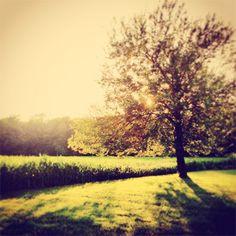 Landscape Photography, tree photograph, nature, natural light, sun, golden yellow, earth tones, farm decor, woodland, giving tree, fPOE