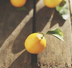 meyer lemon   the lovely kim at rustic garden bistro sent me…   Flickr