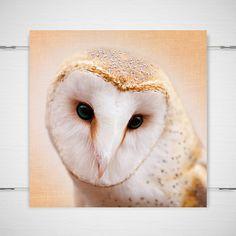 Barn Owl Photography / dreamy fantasy folk / by BokehEverAfter, $25.00