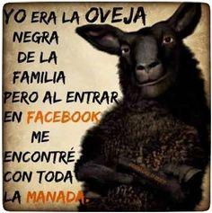 Yo era oveja negra