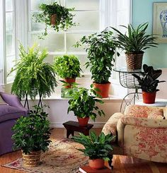 Purify the Air in Your Home Naturally with Houseplants! | Georgia Carpet Industries Blog