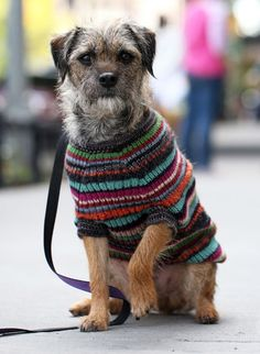 As part of the grand opening celebration for our new location in New York City, we're debuting a limited run of one-of-a-kind dog sweaters, handknit by Peruvian artisans from an array of colorful alpaca yarn.  Each will be unique, in sizes to suit pups Yorkie small to Labrador large. All proceeds from these special sweaters will benefit the Humane Society of New York.